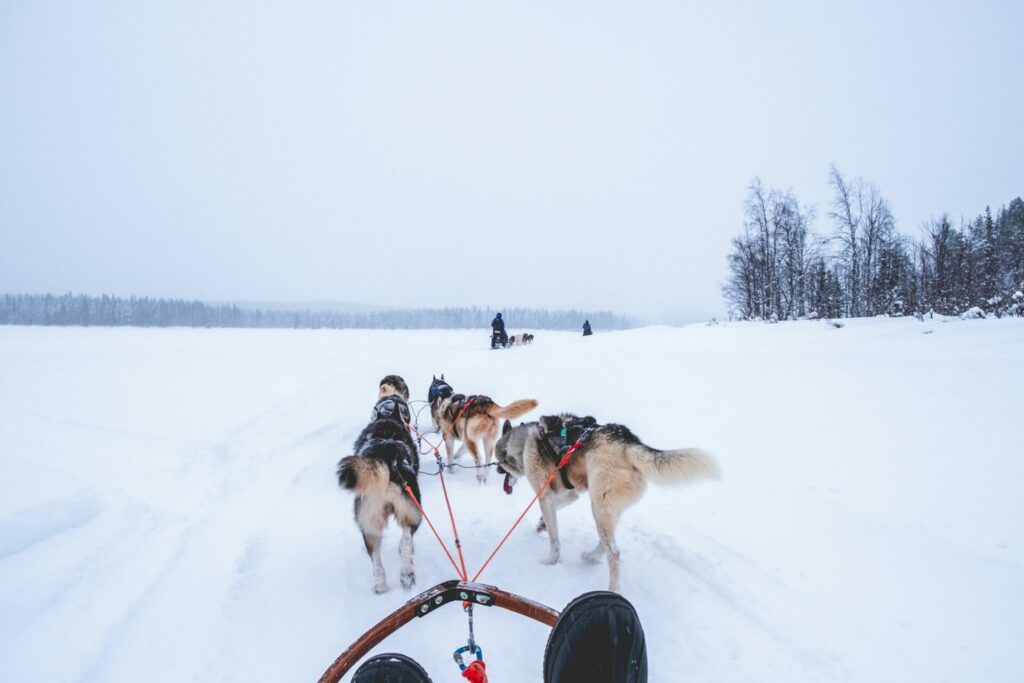Hondensledetocht in Zweeds Lapland.