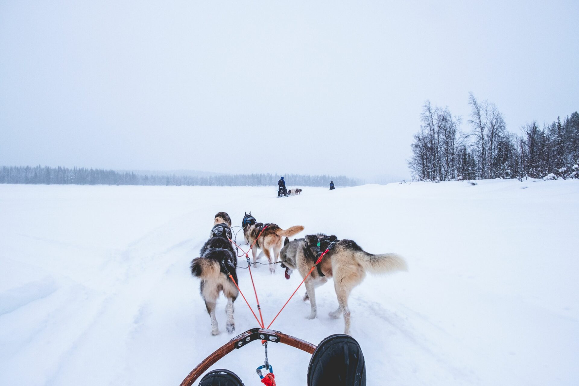 Hondensledetocht in Zweeds Lapland