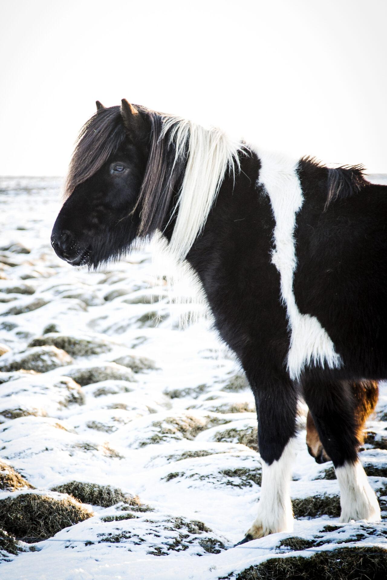 Winter IJsland