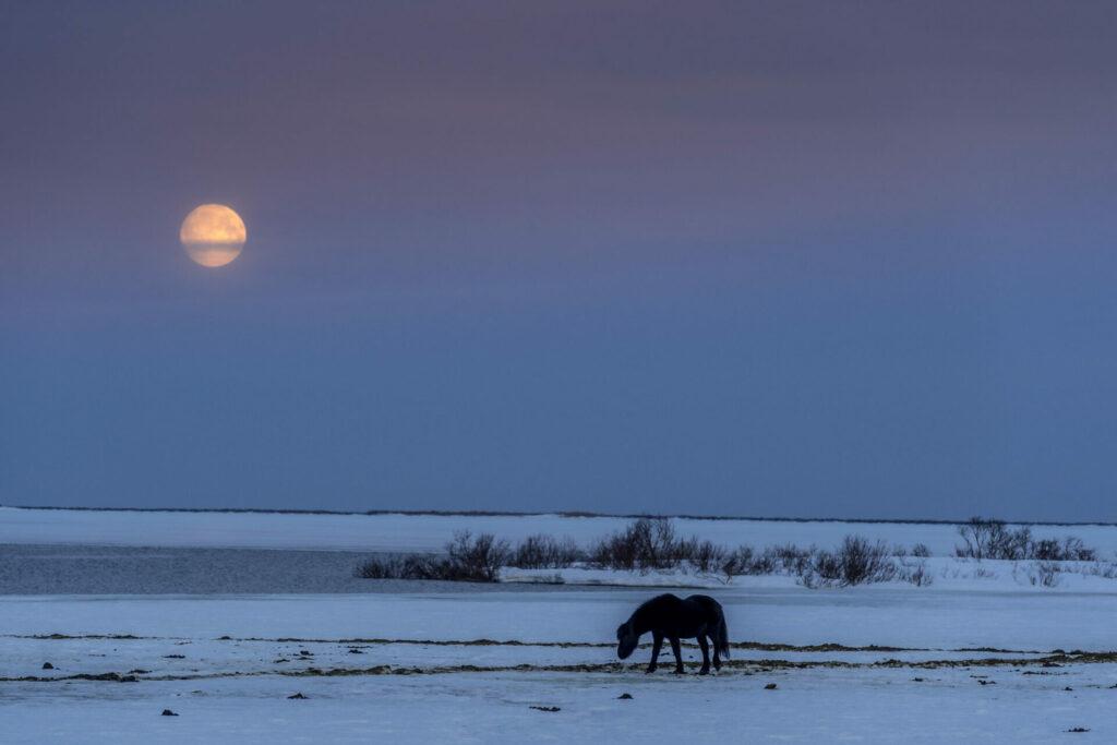 Noord-Ijsland Fotografiereis paarden