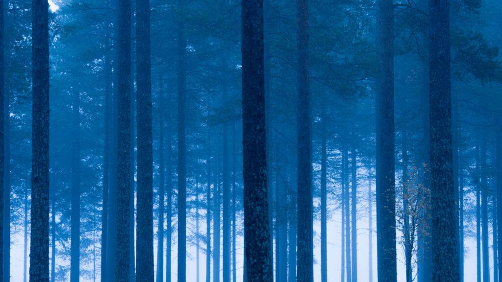 Blauwe ochtendstond