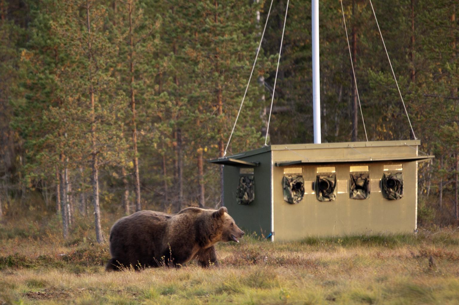 Beren spotten vanuit de fotografie schuilhut