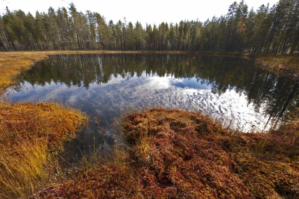Moerasland en meertjes zijn de ideale plekken om wilde dieren te spotten