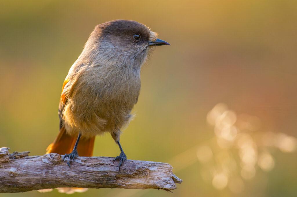 Aandacht voor het lokale vogelbestand