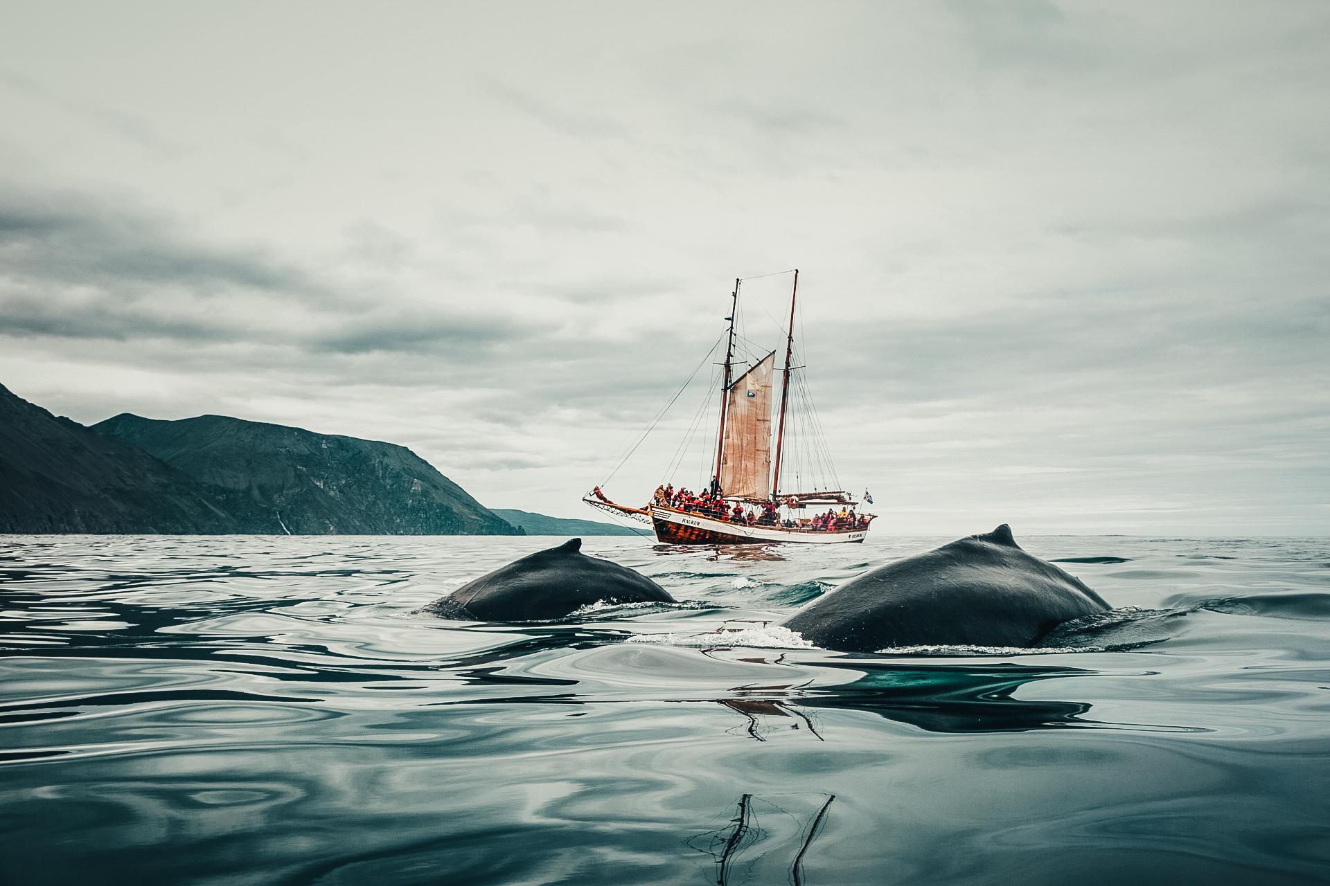 Walvisspotten Noord-IJsland