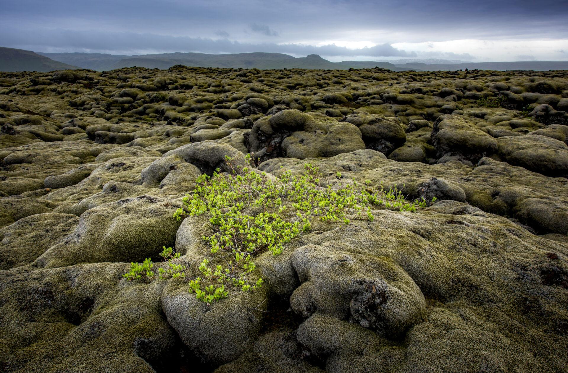 Met mos begroeide lavavelden